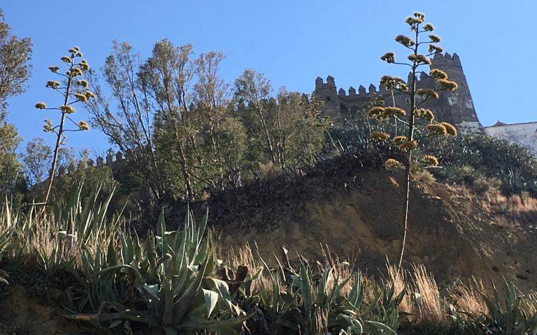 Pitas Bajando La Cuesta Noriega Con El Castillo Al Fondo