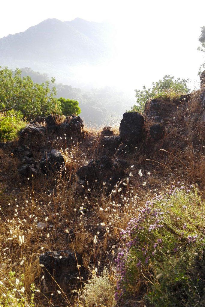 Flora De La Sierra De Grazalema En Verano